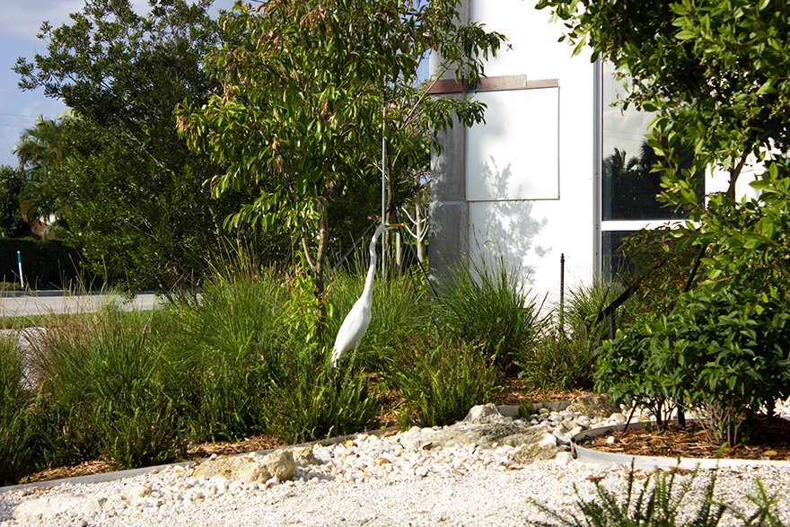 Garden and landscaping ideas for South Florida