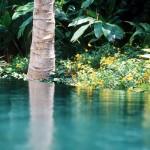 landscape-water-Jupiter-Island