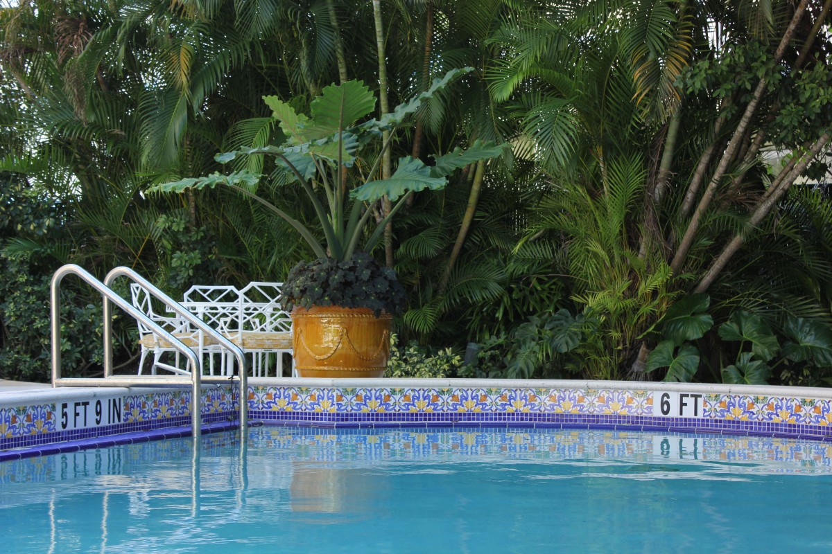 Palm beach colorful pool area studio sprout - Palm beach pool ...