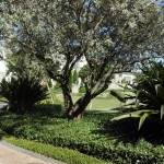 south-florida-landscaping-ideas-12