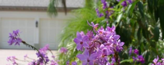 Plants Haven, Loxahatchee Club